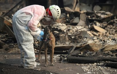 This Story About A Dog Who Survived The California Fires Will Melt Your Heart