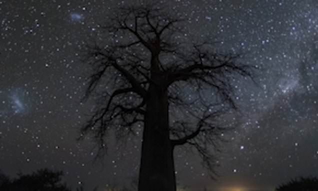 Breathtaking milky way captured across the night sky above baobab tree