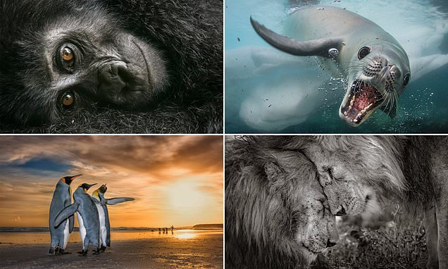Breathtaking images show creatures at their magnificent best