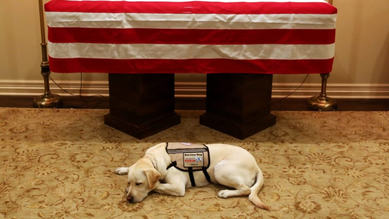 Sully, Bush's service dog, lies by his casket before one last journey with the former president