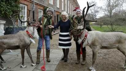 Duchess Camilla Invited Some Of Santa's Reindeer To Clarence House