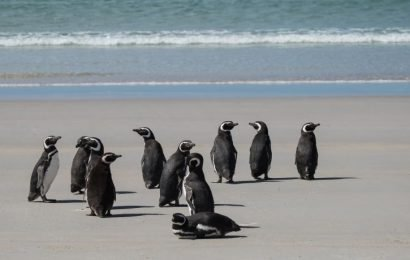 Oceanfront Island Full Of Free-Roaming Penguins Can Be Yours For The Right Price