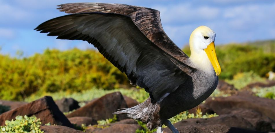 World's Oldest Wild Bird, A 68-Year-OId Albatross Named Wisdom, Becomes A Mother For The 37th Time