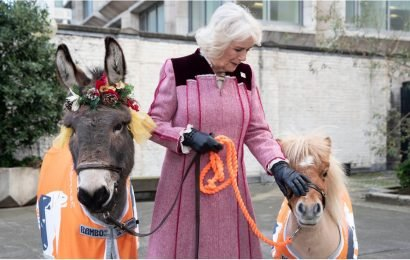 Camilla Posing With a Tiny Pony Called Harry Is the Holiday Gift You Didn't Know You Needed