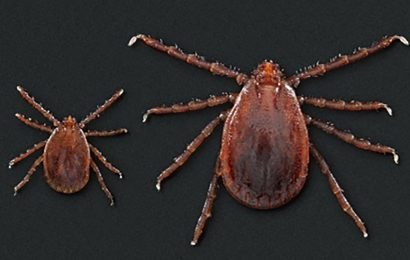 Invasive tick species is becoming an even bigger threat to US