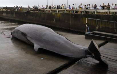 Japan's decision to resume whaling in 2019 prompts international criticism