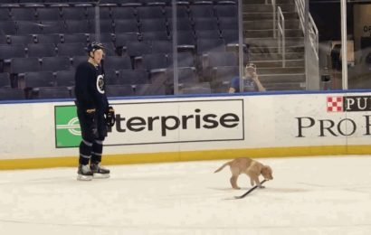 Blues Add Puppy To Practice So Hopefully Players Will Stop Fighting