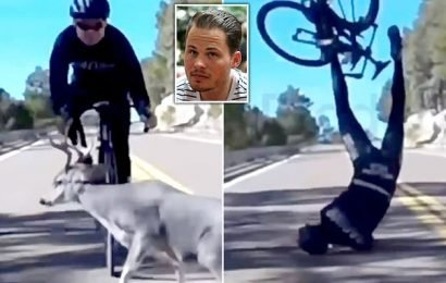 Moment a deer comes rampaging out of nowhere and crushes a cyclist