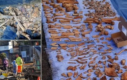 Workers find hundreds of bones in black bags on a building site