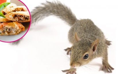 Egg Roll Squirrel Has Replaced Pizza Rat as the Most Popular Hungry Rodent