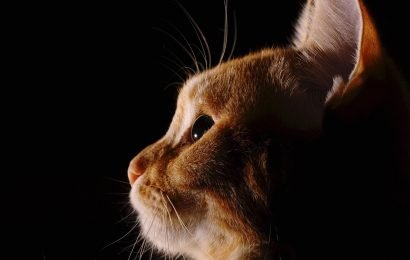 Plague confirmed in third Wyoming cat in last six months: officials