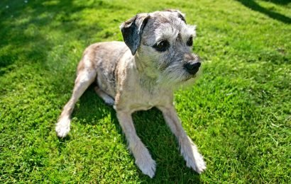 Senior Dogs Can Suffer from Dementia Just Like People Do; Find Out If Your Older Pup Needs Help