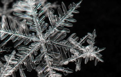 What does 'snowflake' mean, who are 'generation snowflake' and what's the origin of the term?