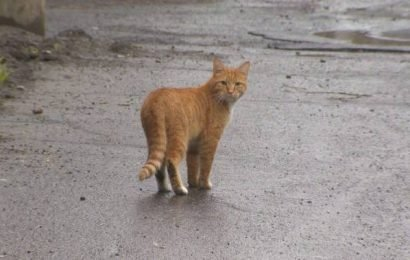 Victoria-area municipalities are being asked to crack down on roaming felines
