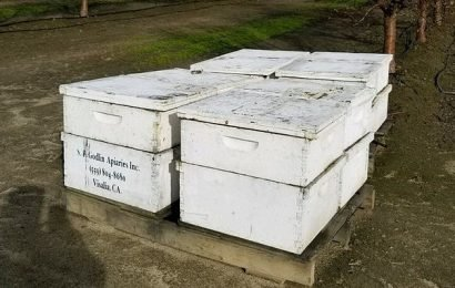 California beekeepers offer $10,000 reward after hive thefts