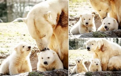 Polar bear cub debuts at Dutch zoo on International Polar Bear Day