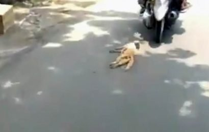Evil motorcyclists drag CAT with a rope around its neck behind them