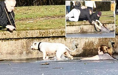 Hero walker risks her life to leap into icy lake and swim 20 yards to rescue drowning dog