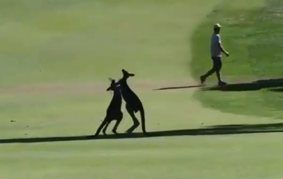 Golfers stunned as two kangaroos FIGHT on fairway at World Super 6 Perth tournament