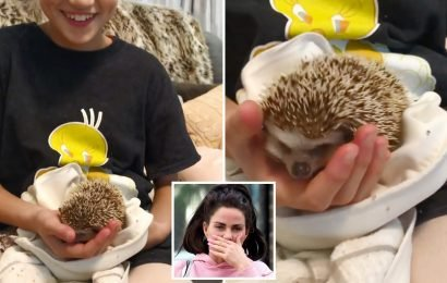 Katie Price blasted by fans for giving Princess a pet hedgehog as 'fashion statement' amid fears it will DIE