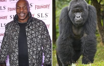 Mike Tyson offered zoo keeper £9,000 to fight a silverback gorilla in a cage