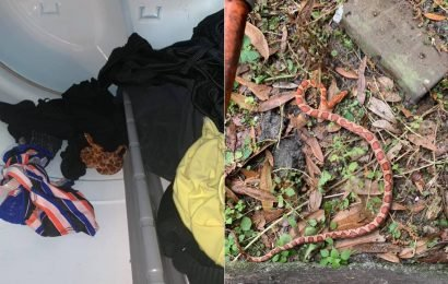 Florida woman discovers snake inside dryer, says she 'never ran so fast in my life'