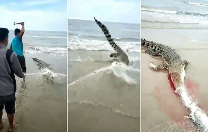 Giant crocodile thrashes around as it is beaten to death