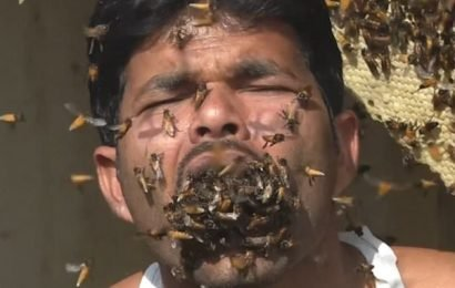Indian honey collector stuffs handfuls of bees in his MOUTH