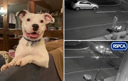 Dog who went viral after chasing owner's car down the street after being dumped before Christmas finds a new home