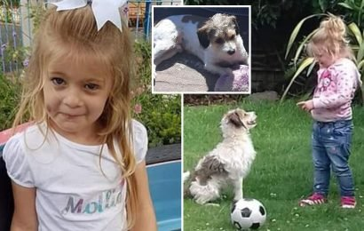 Desperate hunt launched to find autistic girl's, 5, 'best friend' dog who was chased off by German Shepherd