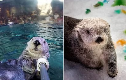 The oldest sea otter at any aquarium or zoo in the world dies at 22