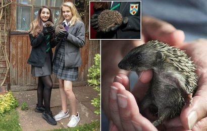 Schoolgirls, 13, set up their very own hedgehog hospital