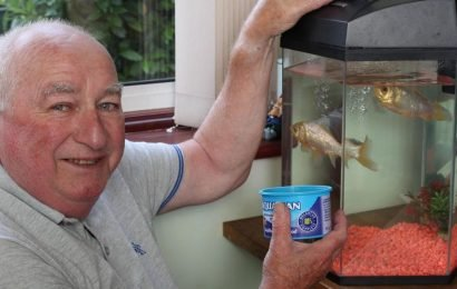 Britain's oldest goldfish George dies aged 44 leaving owners in tears