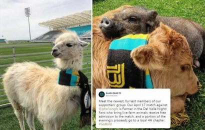 US fans to dress farm animals in football scarves after club offer free tickets to match if they bring livestock to the game