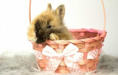 California Bans Impulse Easter Bunny Purchases to Protect Numerous Rabbits Abandoned Each Year