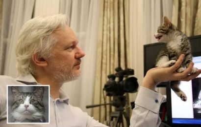 WikiLeaks confirms Julian Assange's tie-wearing pet Embassy Cat is safe after fugitive's arrest in London