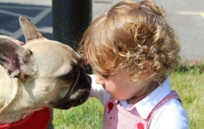 Boy's vet parents save pet dog of the surgeon who operated on their son