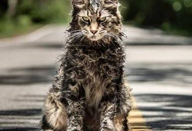 Pet Sematary review: Clever revival of Stephen King classic may put you off cats for life