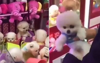 Claw machine that grabs live PUPPIES in China is criticised