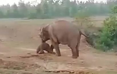 Elephant kills man in India after 'locals pelted it with stones'