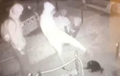 Video shows pair of yobs kick cat in the head during spree