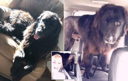 Dog owner laughs as pet comes back from groomers with no fur on legs