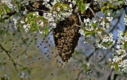 Arizona Mom Stung 30 Times After Beehive Falls from Tree, Lands on Head While Picking Up Son