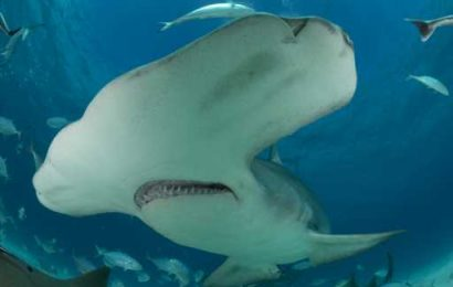 Shark Week 2019: Discovery's Latest Promo Is A Scream