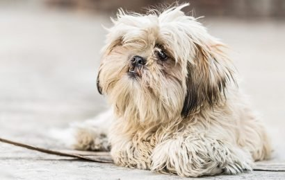Virginia woman has healthy dog euthanized as a part of her will, official says