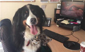 'They're loving life in here today' – Meet the dogs bringing joy to staff around Ireland on #BringYourDogToWorkDay
