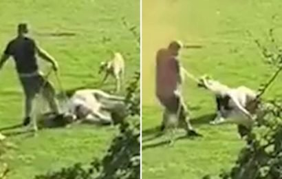 Man drags a horse by the neck before kicking it in the head