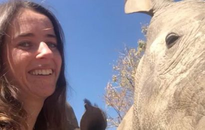 Rhino named Beckham enjoys belly rub at sanctuary in South Africa