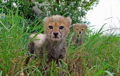 Serengeti returns to BBC One TONIGHT – here's how you can visit the national park and what wildlife you can expect to see