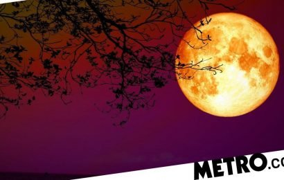 What does the new moon in Leo mean for your zodiac sign?